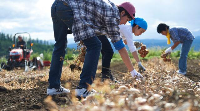 農家の短期雇用をマッチングする農業人材シェアリングサービス