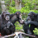 日本最大級、こどもの日の親子向けオンライン合同イベント 「親子でオンライン体験フェス」に「日本モンキーセンター」が出展決定! 〜臨時休園中の動物園からの中継や、研究者の生の声を聞きながら、霊長類の世界をご案内〜