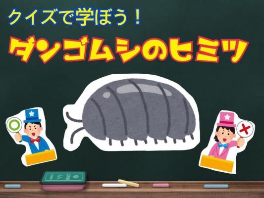クイズで学ぼう!ダンゴムシのヒミツ