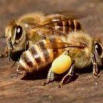 オンラインだからこそ、いろんな場所のいろんな虫を観察できる 「集まれ虫の森!オンライン昆虫パーク」を開催! 〜日本最大級、親子向けオンラインイベント「親子でオンライン体験フェス」〜